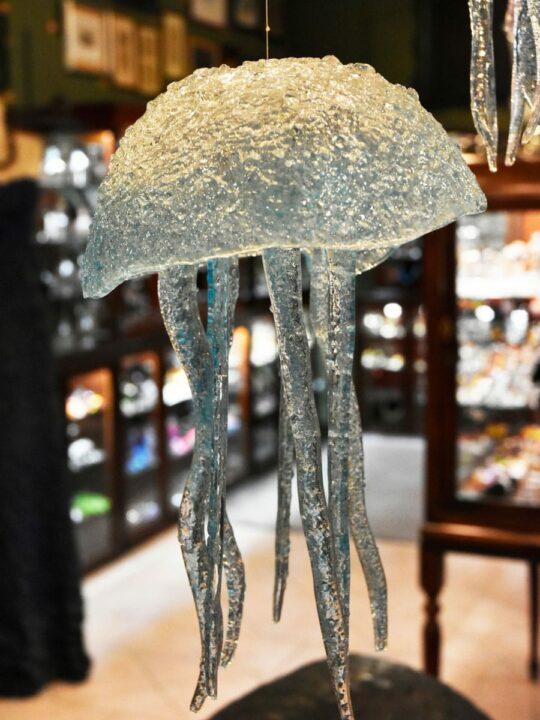 Medusas / Jellyfish